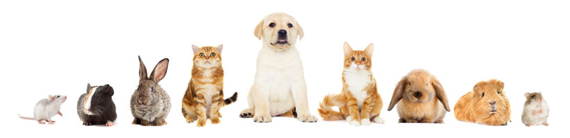 Tierfutter und Tierbedarf für alle Tierarten